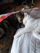 Mezzo et Nicky (Olaf) 2