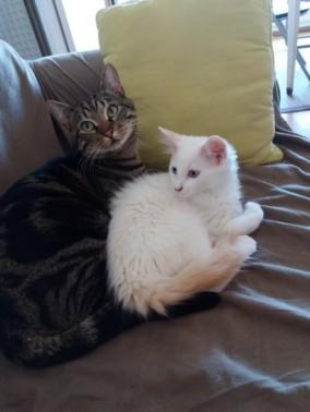 Mezzo et Nicky (Olaf) 3