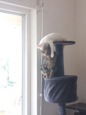 Mezzo et Nicky (Olaf)