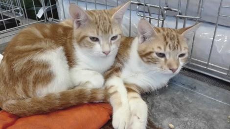 Nuka (à droite) et sa soeur Naola (à gauche)