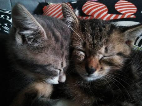 Nila et son frère Norman
