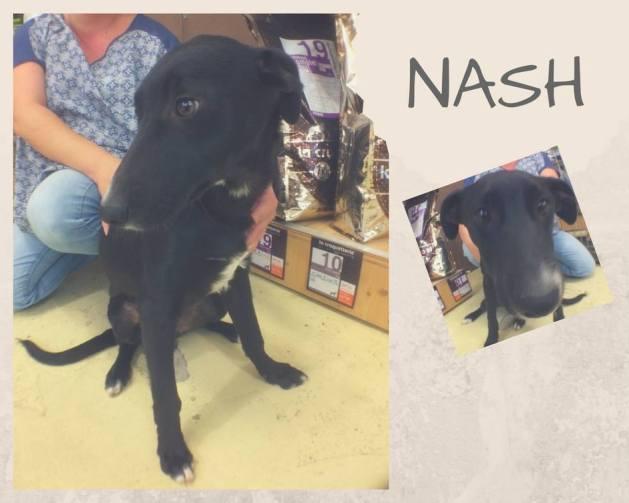 Nash oct. 2017