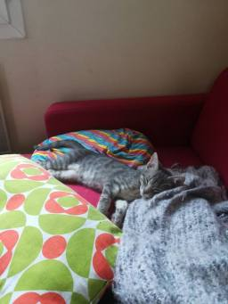 Noix de coco sieste