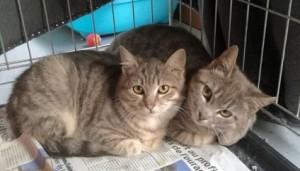 Nohé (à doite) avec sa soeur