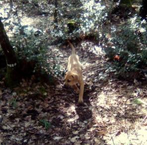 Naë en forêt_02
