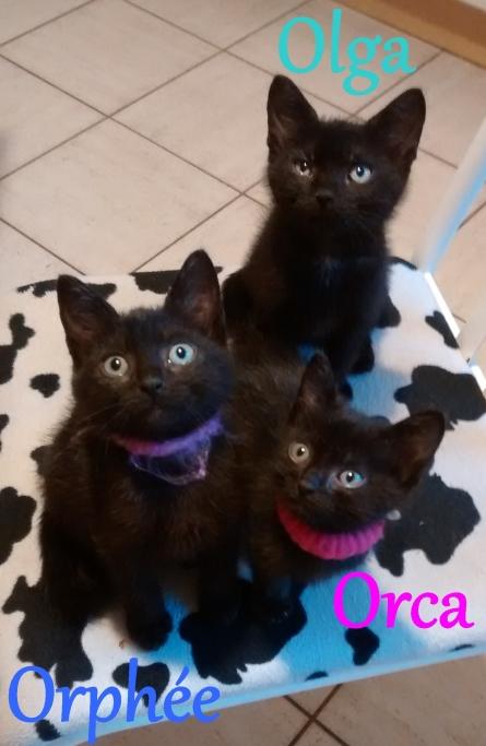 Olga, Orca, Orphée