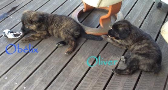 Oliver et Obélix mai 2018