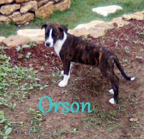 Orson juin 2018