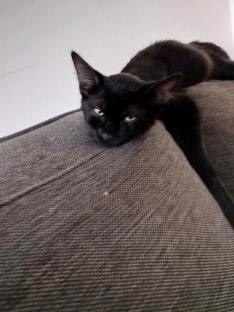 Dur dur d'être un chaton