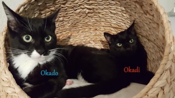 Okado et Okadi