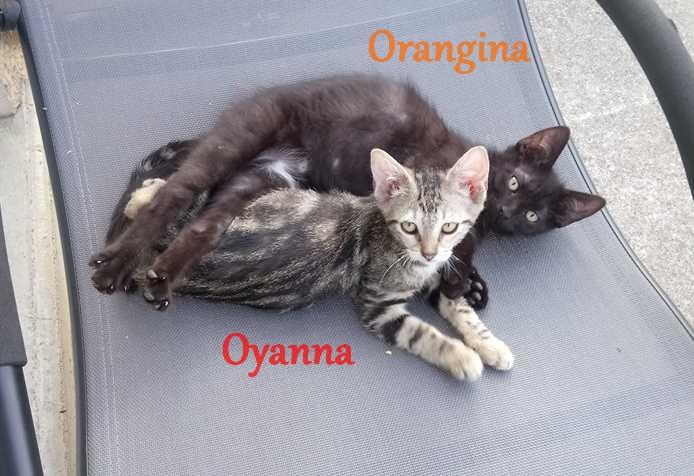 Orangina et Oyanna 3 oct. 18