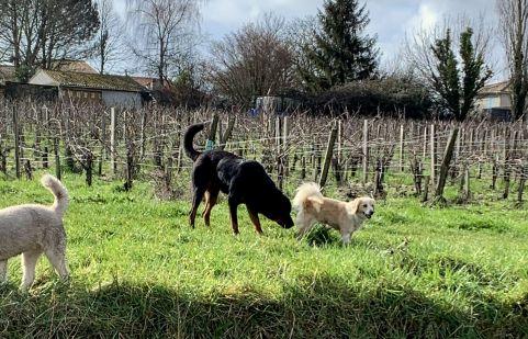 promenade au coeur des vignes