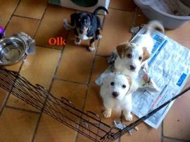 Olk et ses copains janvier 19
