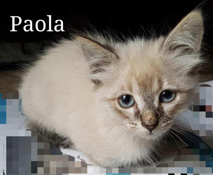 Paola juillet 2019