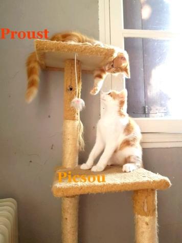mini_Proust 4