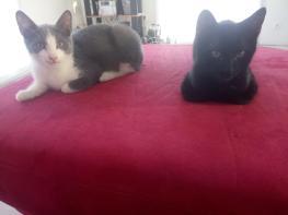 Pehio et frère ou soeur