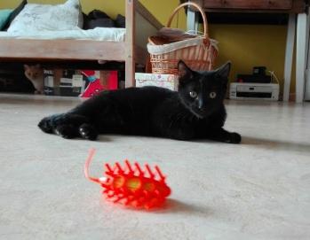 Phicello et sa souris de l'espace