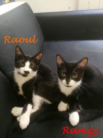 Raoul et Ramzy juillet 2020