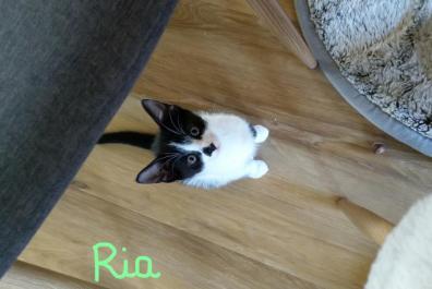 Ria (4)