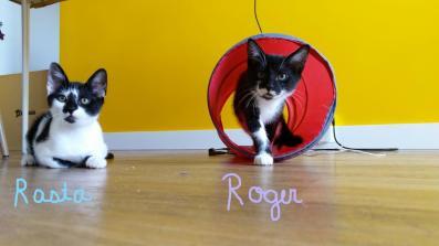 Roger et Rasta (2)